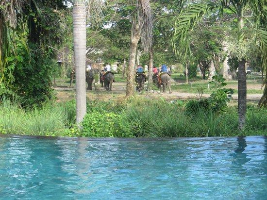 Mara River Safari Lodge : elephants passing infinity pool