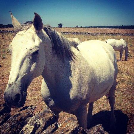 Faenas Camperas: caballos