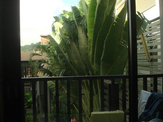 Aree Tara Resort: View from room