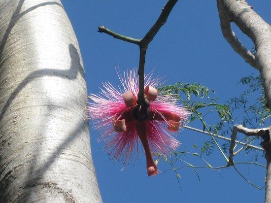 J.R. O'Neal Botanic Gardens : fiori