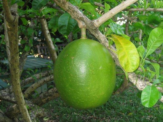 J.R. O'Neal Botanic Gardens : altri frutti strani