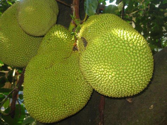 J.R. O'Neal Botanic Gardens: che frutti