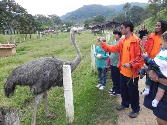 Hotel Fazenda 3 Pinheiros: Alimentando a avestruz