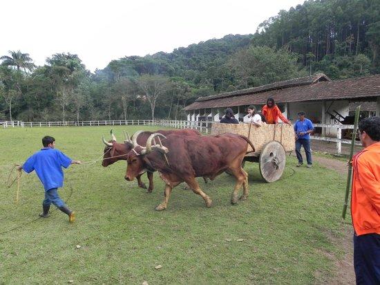 Hotel Fazenda 3 Pinheiros: Carro de boi