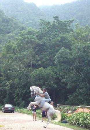 Island Horses : Hamzah on one of his Arabians