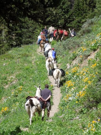 Wildland Llamas: Along the trail