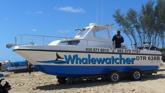 Sodwana Bay Lodge : Whale Watching