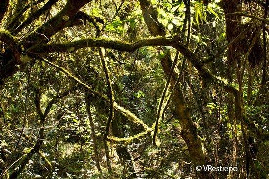 Hacienda Baza Hotel: Forest trail