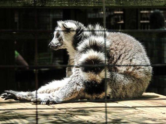Luray Zoo - A Rescue Zoo: Lima