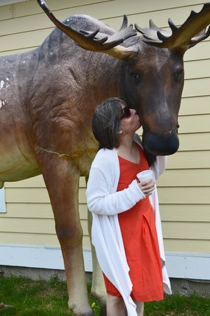 Bay of Fundy: Kiss a moose