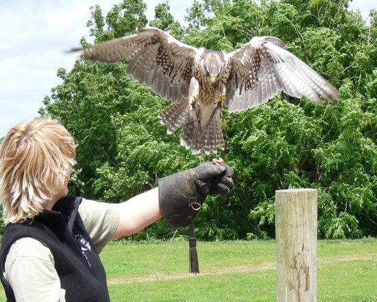Raptor Foundation: Getting up close and personal