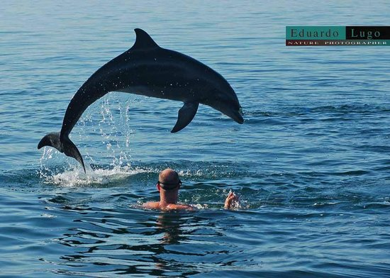 Wildlife Connection: Dolphins in the wild