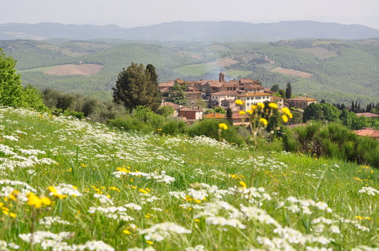 Sara Testi ,Hiking, Walking and Tour Guide in Siena & Tuscany: Vagliagli, in the Chianti Classico area