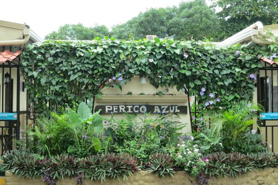 Hotel Perico Azul : front of hotel, very safe and secure