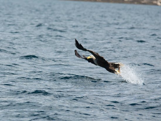 Loch Visions: Fish Eagle Fishing