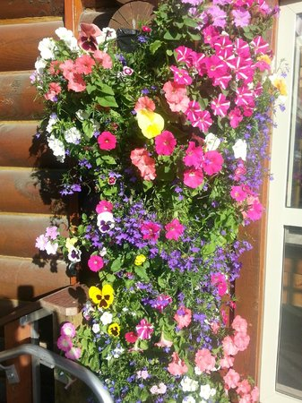 Kenai Princess Wilderness Lodge: Beautiful flowers at entry of resort.