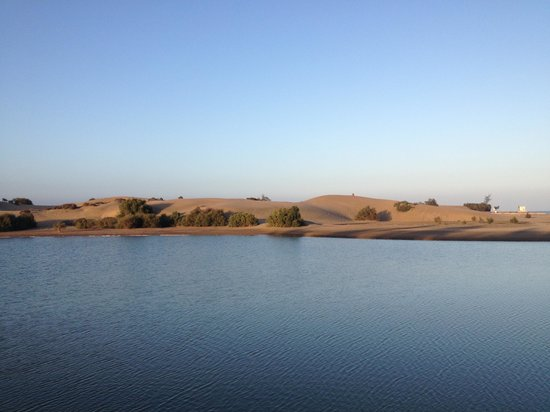 Maspalomas Oasis Club: Maspolomas beach and sand dunes