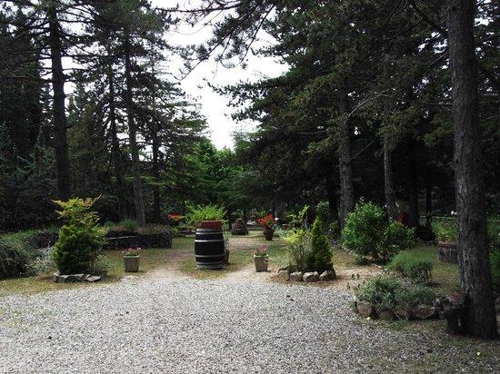 Villa Sant'Uberto Country Inn: Weg zum Parkplatz