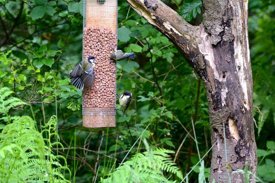 Threave Garden: Bird Hide