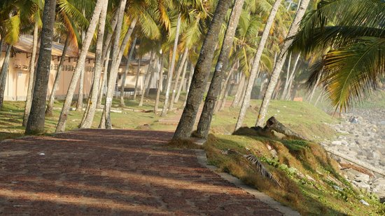 Blue Water Beach Resort: path to varkala beach