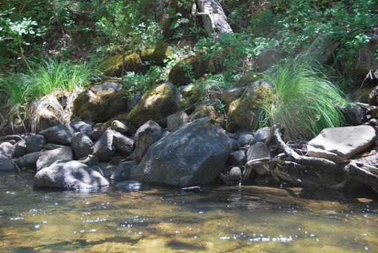 Yosemite Riverside Inn: Vue de la rivière a coté de l'hotel