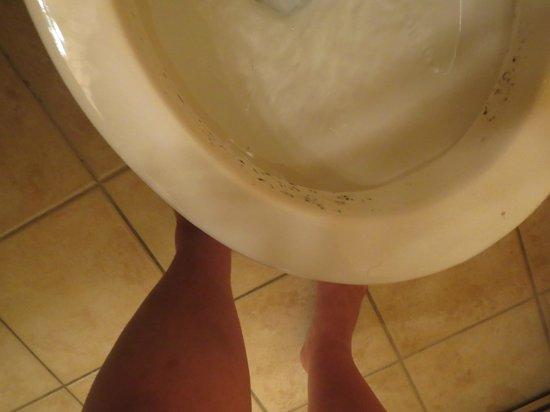 Howard Johnson Inn Fort Erie : toilet