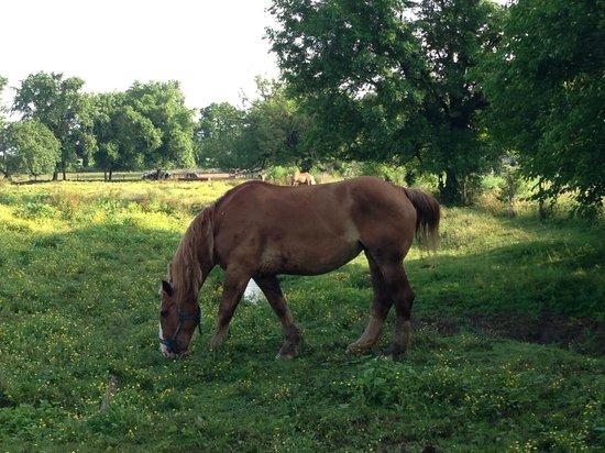 Quiet Haven Motel: Across the road, horses grazing