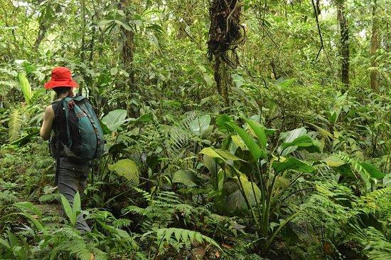 Rara Avis Rainforest Lodge & Reserve: Hiking the Platanilla trail