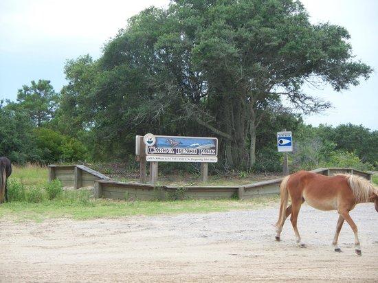 Corolla Wild Horses Without Tour