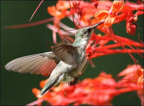 Country Charm Bed and Breakfast: Hummingbirds