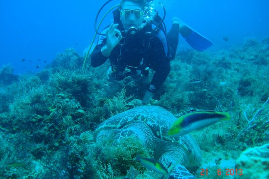 Royal Club at Occidental Grand Cozumel : Turtle