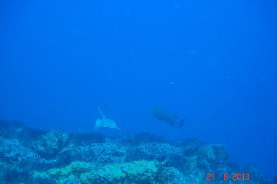 Royal Club at Occidental Grand Cozumel : Stingray and a Grouper
