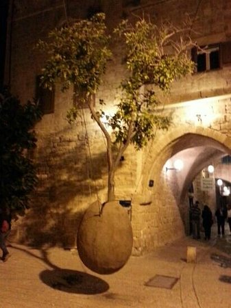 ‪يافا, إسرائيل: the hanging tree in Yafo‬