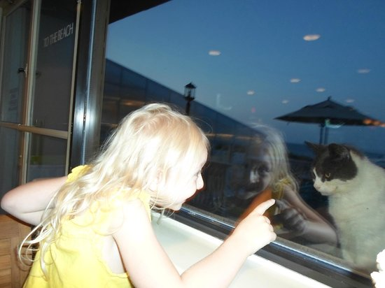 Ramada Plaza Nags Head Oceanfront: Kitty watching our meal at Peppercorns inside Ramada Plaza