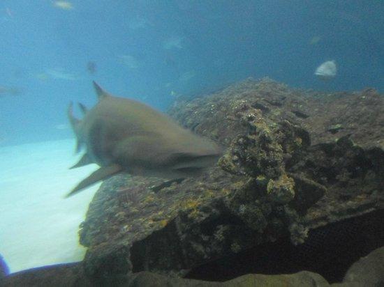 North Carolina Aquarium on Roanoke Island: Aquarium Photos