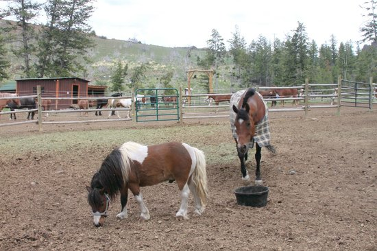 Blackwater Creek Ranch : The Corral