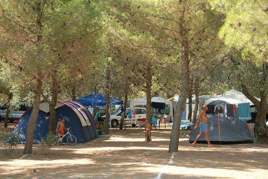 Camping Lama Le Canne: Il Campeggio