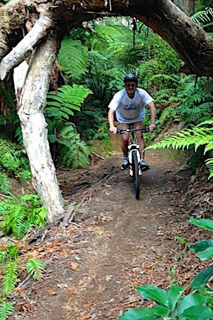 B&B @ The Redwoods: Mountain Biking the Redwood forest