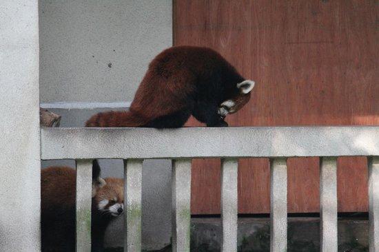 Chongqing Zoo (Chongqing Dongwuyuan): Yes, there's more than just pandas