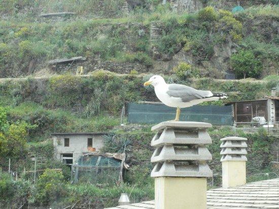 Il Patio : Friendly seagull