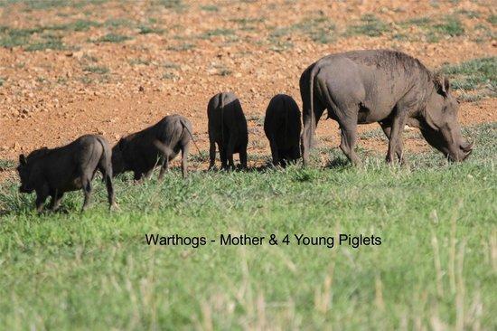 Watu Safaris: Mikumi