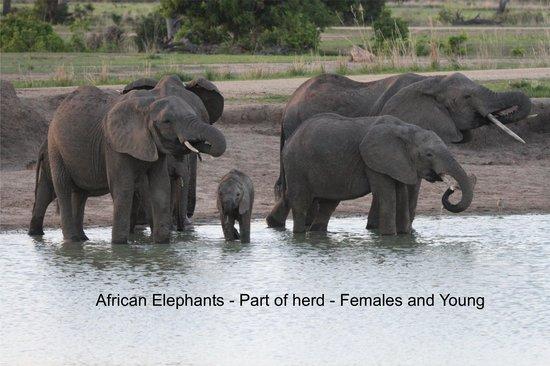 Watu Safaris: Ruaha