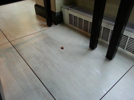 Hilton Garden Inn Albany Airport: ants