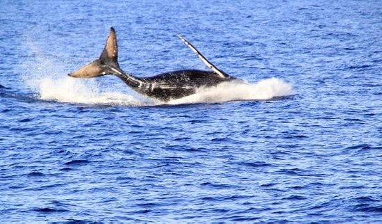 Kahana Falls : January through March is peak whale season