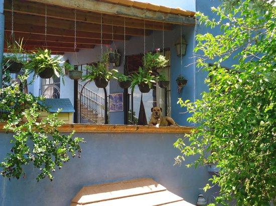Casa Carly: Segundo piso y la perra gringa