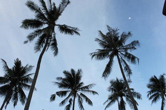 Shiva Samui: looking upwards
