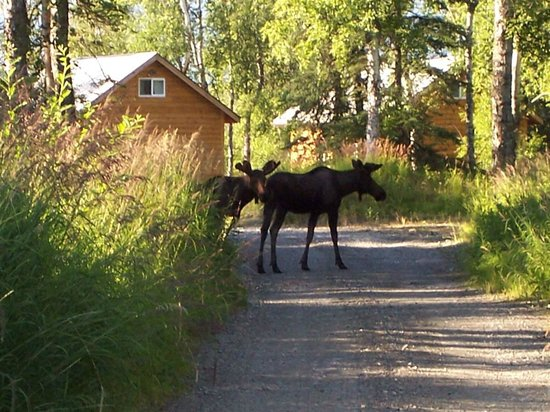 Alaska Creekside Cabins : Cottonwood Creek location