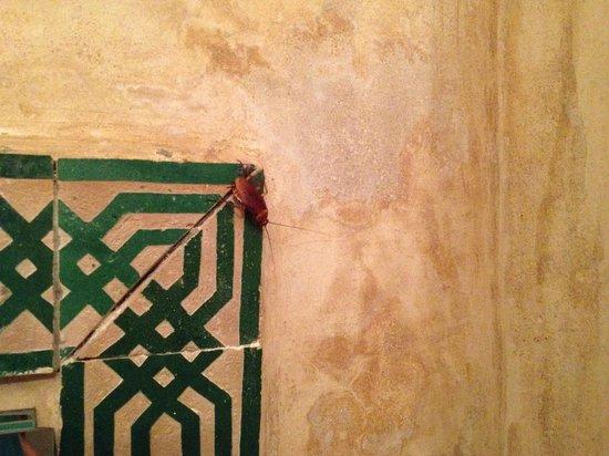 "Riad Dar Alfarah: encore un  autre ""colocataire"""