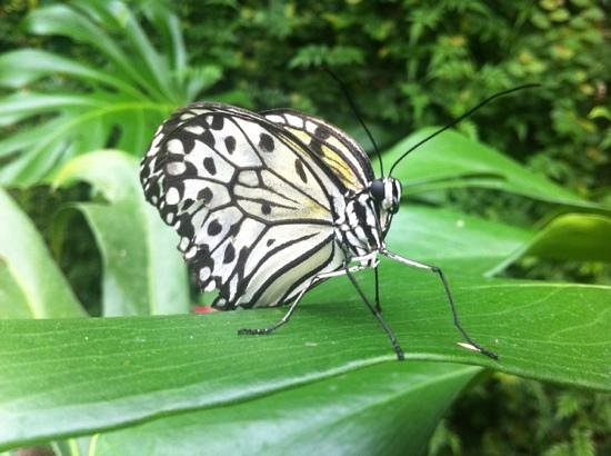 Straffan Butterfly Farm: nature at its best on display at Straffan Butterly Farm