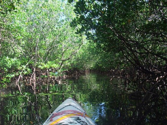Isle of View Beach Resort And Guesthouse: Touring around with Bill in the mangrove forest. Get lucky when you see monkeys catching crabs.